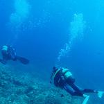 スキューバダイビング / Scuba Divingのイメージ画像